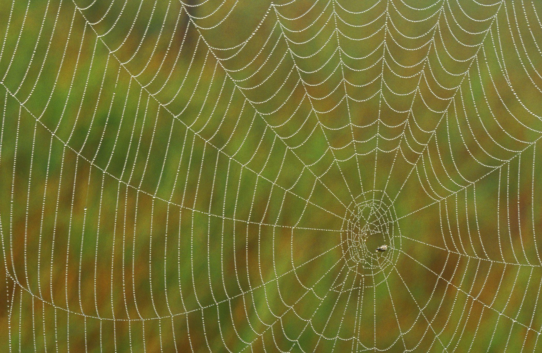 Có thể bạn chưa biết tơ nhện nhân tạo có thể thay cho nhựa!